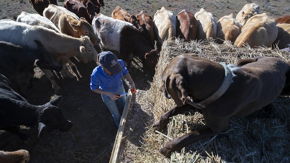 westpac news - photo #22